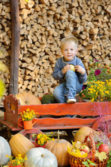 Happy young boy sitting with a pumpkins. Autumn