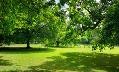 Sunny Meadow with green grass and large trees