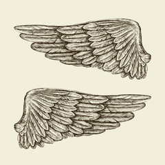 Hand drawn vintage wings. Sketch vector illustration