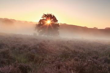 misty sunshine on heathland in summer
