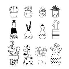 Vector illustration succulent plants, cactus