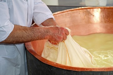Senior cheesemaker collects the cheese with the tarp from the co