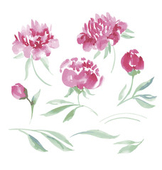 pink peony watercolor flowers kit for design. watercolor hand dr