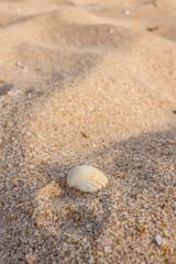 Muszla na plaży w Portugalii
