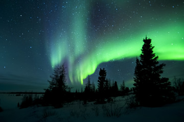 Wall Murals Arctic Aurora borealis, northern lights, wapusk national park, Manitoba, Canada.