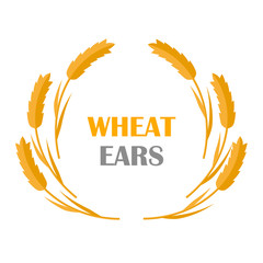 Wheat Ears Concept Illustration in Flat Design.