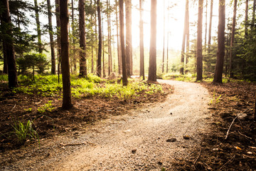 Wall Murals Beige Hiking path and sunset in beautiful woods