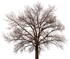 Silhouette of a tree on white background