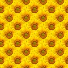 Sunflower seamless background