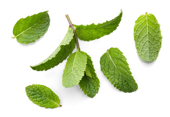 fresh green mint leaves