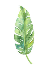 Tropical banana leaf illustration