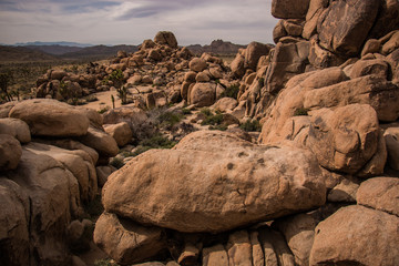 Rocks at Joshua Tree