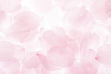 Papiers peints Fleur de cerisier 桜の花びら