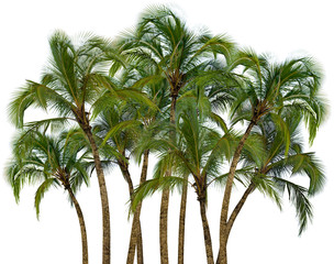 Group of palm trees on white background