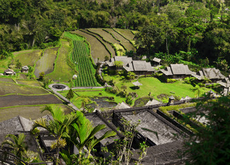 Asia. View of the rice plantations