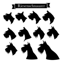 Set of riesenschnauzer or giant schnauzer dog head icons. Elements of logo for pet shop, styling and grooming salon, dog products or services. Vector Illustration