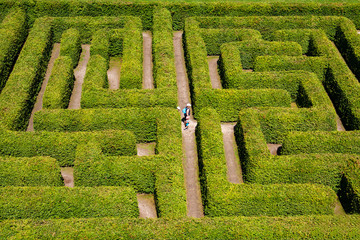 People walking on green bushes labyrinth, hedge maze.