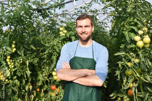 erfolgreicher bauer im gew chshaus mit tomatenpflanzen successful farmer in a greenhouse. Black Bedroom Furniture Sets. Home Design Ideas