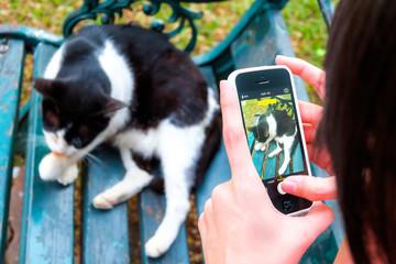 capture the cat