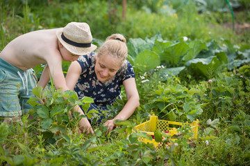 Young woman and cute kid boy picking strawberries in the garden. Family enjoying summer harvest. Lifestyle concept