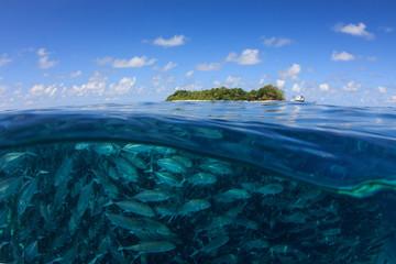 Fototapete - Fish in sea and Sipadan Island. Half and half over under split image