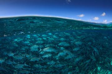 Fish in sea and Sipadan Island. Half and half over under split image