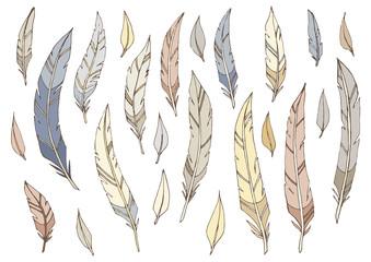 Перья птицы