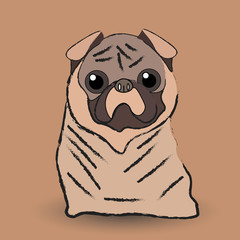 Mops little dog
