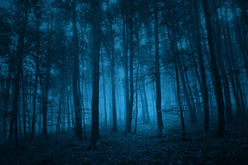 Tuinposter Bos Dark blue colored spooky forest tree landscape. Blue color filter effect used.