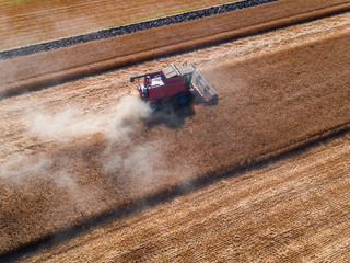 Wall Mural - Working Harvesting Combine in the Field of Wheat