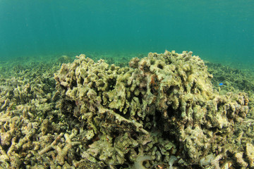 Coral bleaching, dead reef, global warming, climate change, overfishing