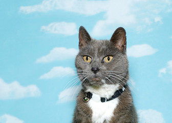 Old scruffy gray and white tabby wearing black and white collar looking forward and slightly to viewers left side, blue sky background with clouds. copy space