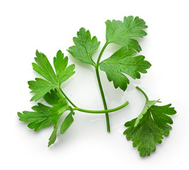 fresh green parsley leaves