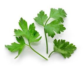 fresh green parsley leaves
