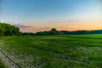 Beautiful sunset over the green large field