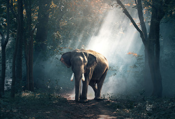 Elephants in the forest Wall mural