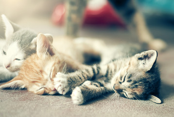 Sweet moment A group of different kitten sleeping on the floor.I
