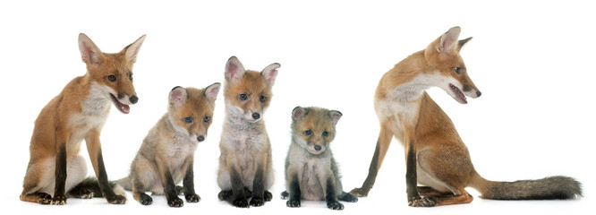 fox family in studio