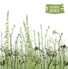 Vector poster with silhouettes of flowers and grass, botanic vector background.