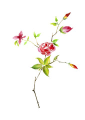 Branch Flower rose with buds, watercolor on an isolated white background