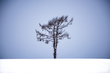 Single bare tree in snow, set against a blue-grey sky.