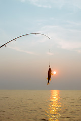 fish on a hook on the sunset background. fly-fishing. fishing rod and fish on background of the setting sun
