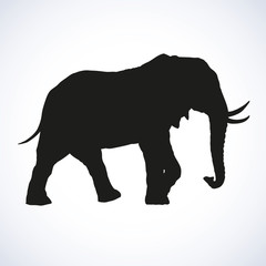 Elephant. Vector drawing