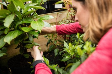 Female florist pruning a plant with pruning shears