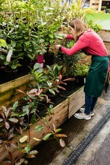 Female florist checking pot plant