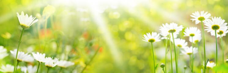 Blumenwiese im Sommer  -  Panorama, Banner