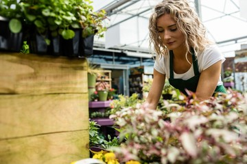 Female florist checking flower