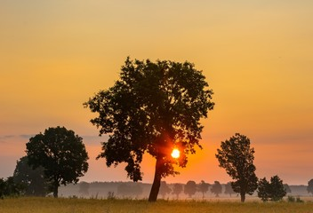 Summer sunrise over fields and trees silhouettes