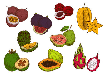 Fresh tropical fruits sketch icons