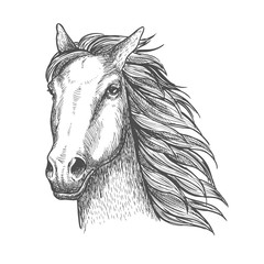 Racehorse stallion sketch for horse racing theme